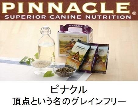 PINNACLE(ピナクル)のトップページ
