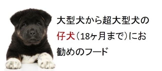 大型犬から超大型犬の仔犬(18ヶ月まで)におすすめのフード
