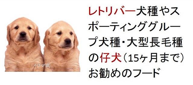 レトリバー犬種やスポーティンググループ犬種・大型長毛種の仔犬(15ヶ月まで)おすすめのフード