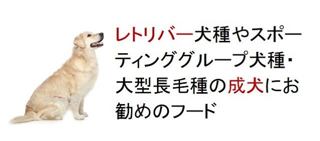 レトリバー犬種やスポーティンググループ犬種・大型長毛種の成犬におすすめのフード