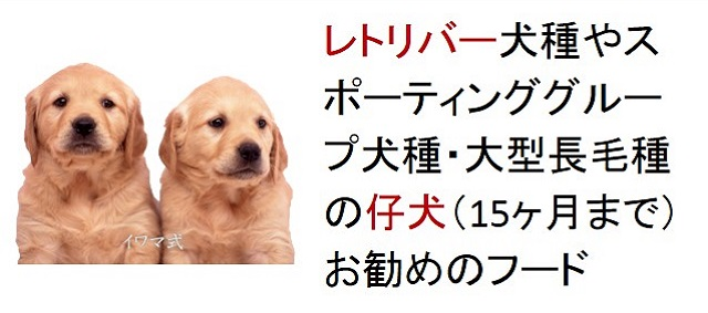 レトリバー犬種やスポーティンクグループの仔犬